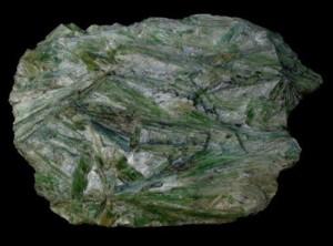 actinote 1